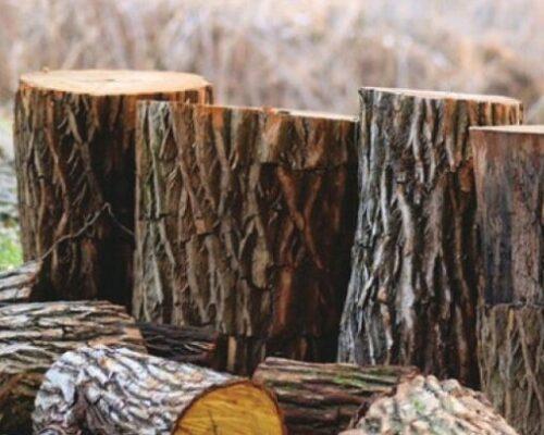 На Кіровоградщині судитимуть одного із сільських голів.