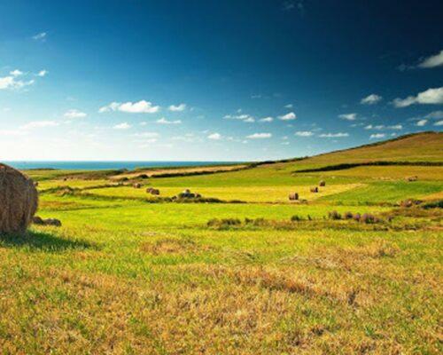 На Кіровоградщині оголошено підозру керівнику сільгосппідприємства за фактом самозахоплення майже 340 га землі.