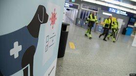 У МВС розглядають можливість залучення собак-нюхачів для виявлення людей із COVID-19.